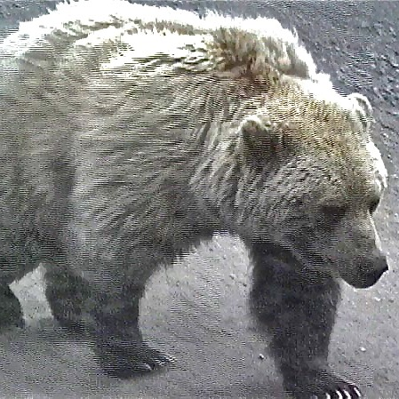 @goswampy Get eye-to-eye with a great Grizzly in Alaska! Link Thumbnail   Linktree