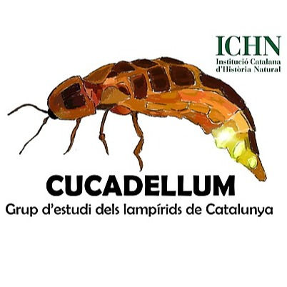 @cucadellum Profile Image | Linktree