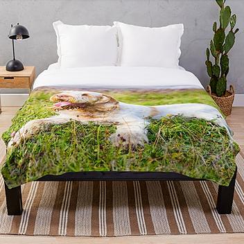 Spinone Bedding
