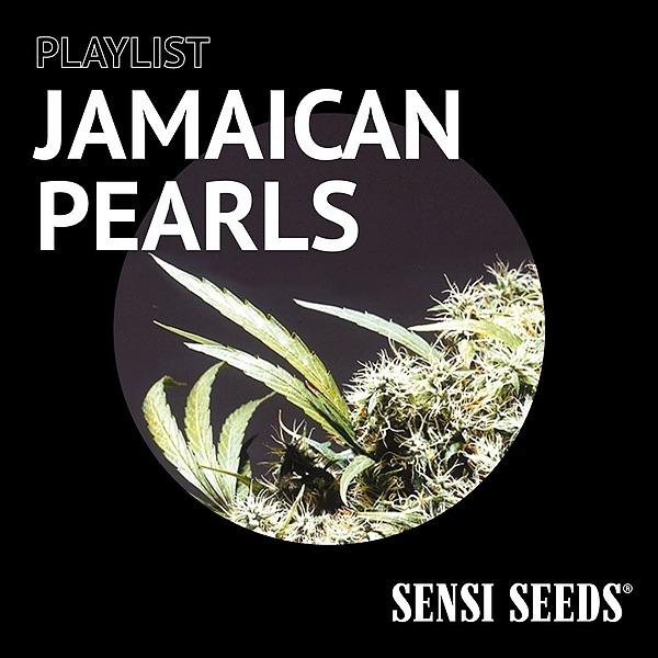 Sensi Seeds Flagship Store Spotify Playlist - Jamaican Pearls Link Thumbnail   Linktree