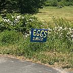 @audreyglang Eggs One Mile Link Thumbnail | Linktree