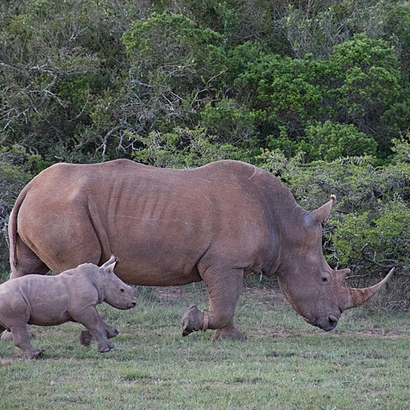 Learn more about rhinos!