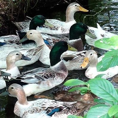 Doug's Ducks Doug's Ducks LLC Link Thumbnail   Linktree