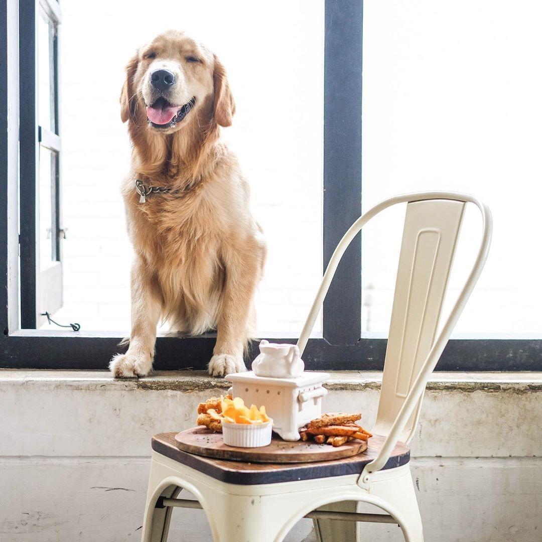 @fashionhr Preslatki kafić za pse koji će vas potaknuti na daleko putovanje Link Thumbnail | Linktree