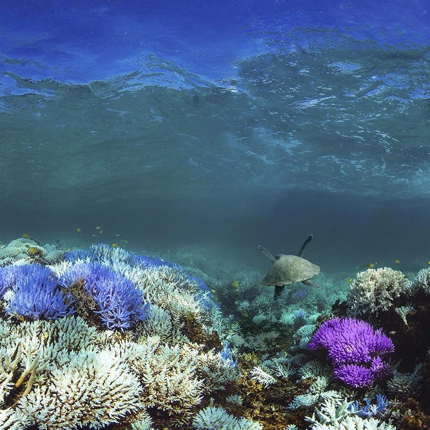 @adobespark #GlowingGone Save the Ocean Creative Challenge Link Thumbnail | Linktree