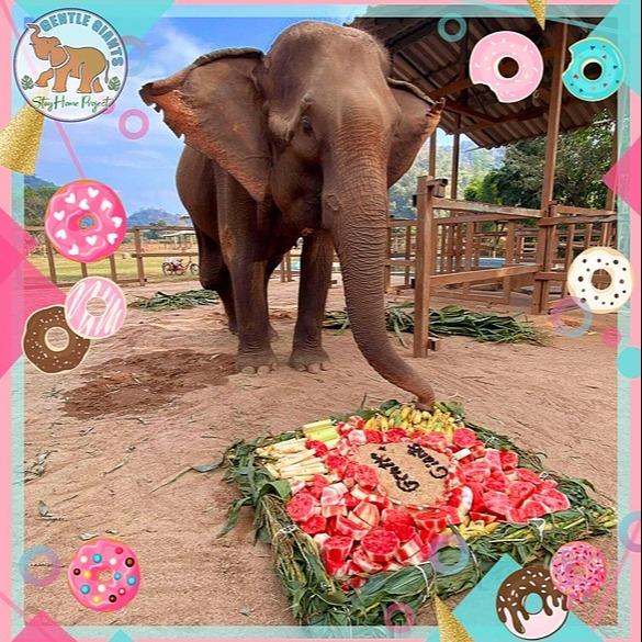 @GentleGiantsNonProfit Elephant Celebration Cakes Link Thumbnail | Linktree