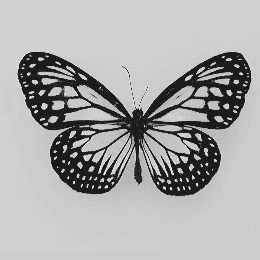 @TheButterflyProject Profile Image | Linktree