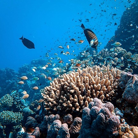Reef Friendly Sunscreen