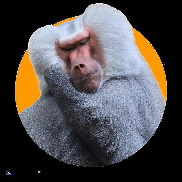 Impronta Animale (Improntanimale) Profile Image | Linktree