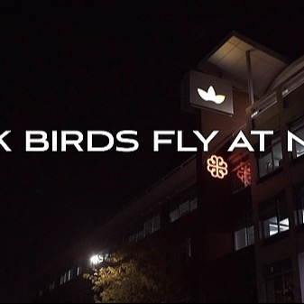 BLACK BIRDS FLY AT NIGHT (OFFICIAL VIDEO) 🎥
