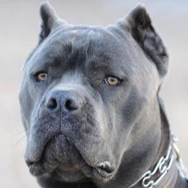 @corsodogs.ru Profile Image | Linktree