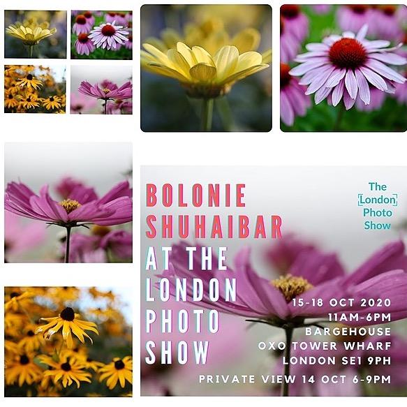 "Bolonie ""Flower Dances"", London 2020 Link Thumbnail   Linktree"