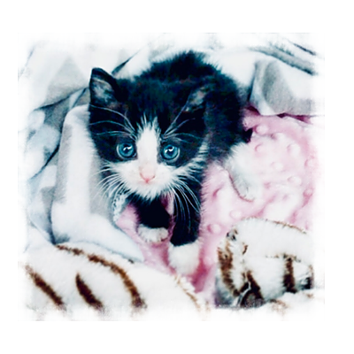 Give Me Shelter Project Kitten Incubator GoFundMe: The Animal Rights Club of Great Neck North HS Link Thumbnail | Linktree