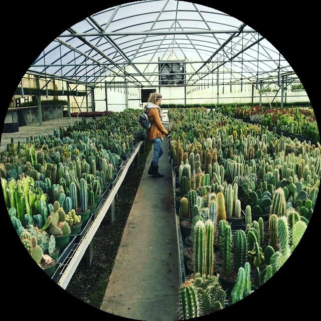 @wandering_succulents Profile Image | Linktree