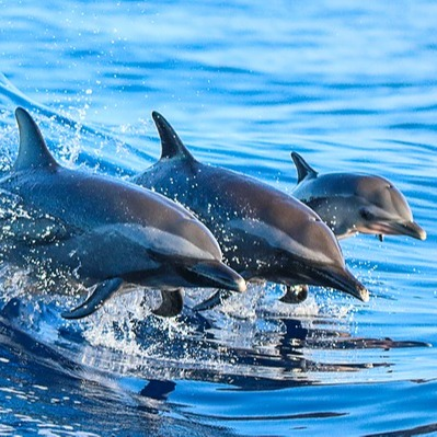 @oceana Protect Our Oceans from Climate Change Link Thumbnail   Linktree