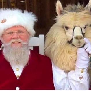 """Alpacas Make You Smile®"" Photos with Santa, Mrs Claus & Alpacas round 2 Link Thumbnail | Linktree"