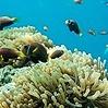 Coral Reefs Under Assault