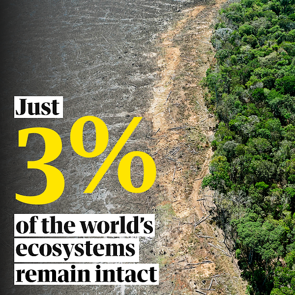 Just 3% of world's ecosystems remain intact, study suggests