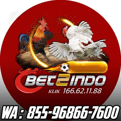 Judi Sabung Ayam Online Linktree