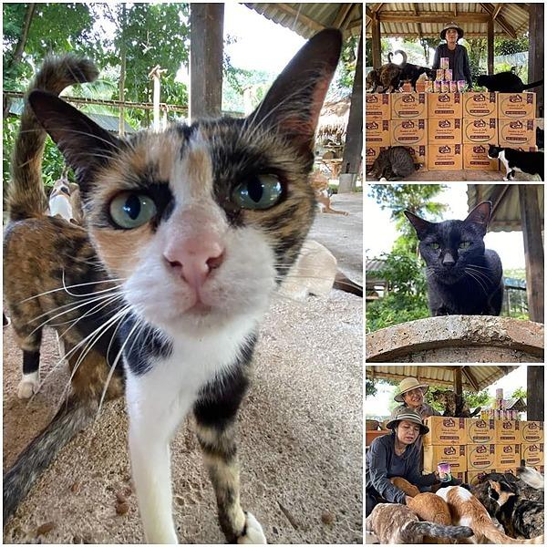 @GentleGiantsNonProfit ENP Cat Kingdom Donations Link Thumbnail | Linktree