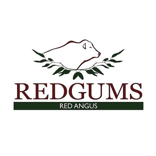 @redgumsredangus Profile Image | Linktree