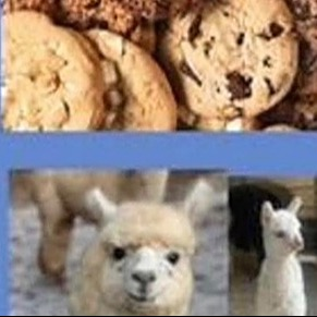 Cookies and Alpacas