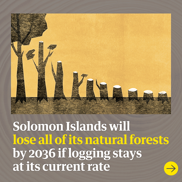 @guardian Lush forests laid to waste: how Pacific Islands got hooked on logging Link Thumbnail | Linktree