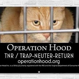 @Op_HoodCats Profile Image | Linktree