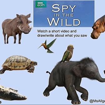 @RebeccaAllgeier Spy in the Wild Link Thumbnail | Linktree