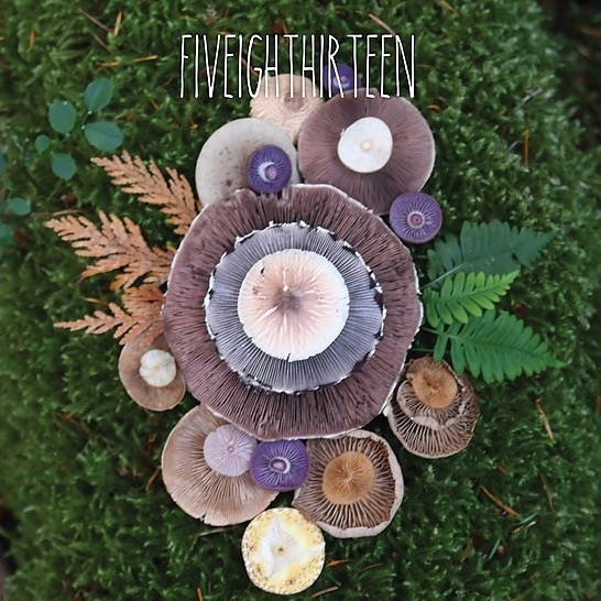 Fiveighthirteen (fiveighthirteen) Profile Image | Linktree