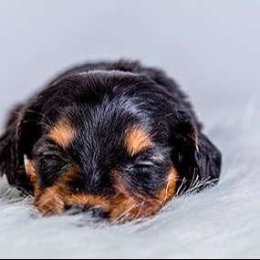 @BuzakosDoxies YouTube welcome post, and tips for puppies Link Thumbnail | Linktree