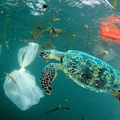 @oceana Help Put an End to Single-use Plastics Link Thumbnail   Linktree