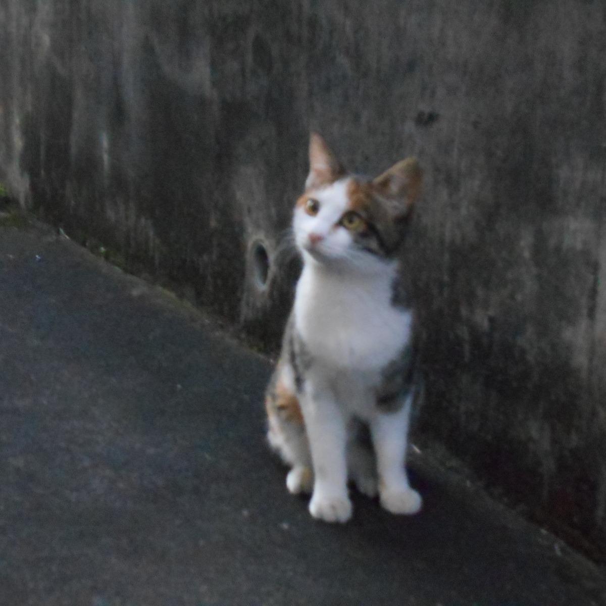 @yamatoneko Profile Image | Linktree