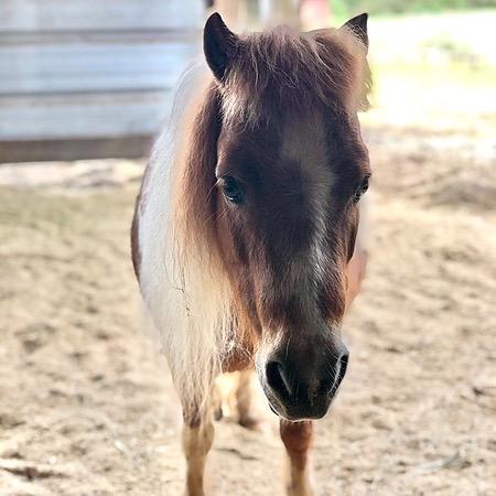 MA Horse Rescue & Outreach (mahorserescue) Profile Image | Linktree
