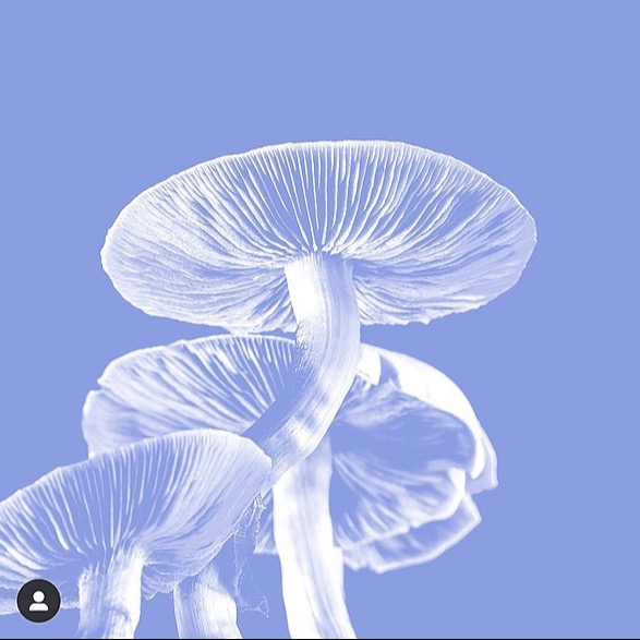 The Sphere Club 🍄Find a Psychedelic Study Enrolling Patients 🍄 Link Thumbnail | Linktree