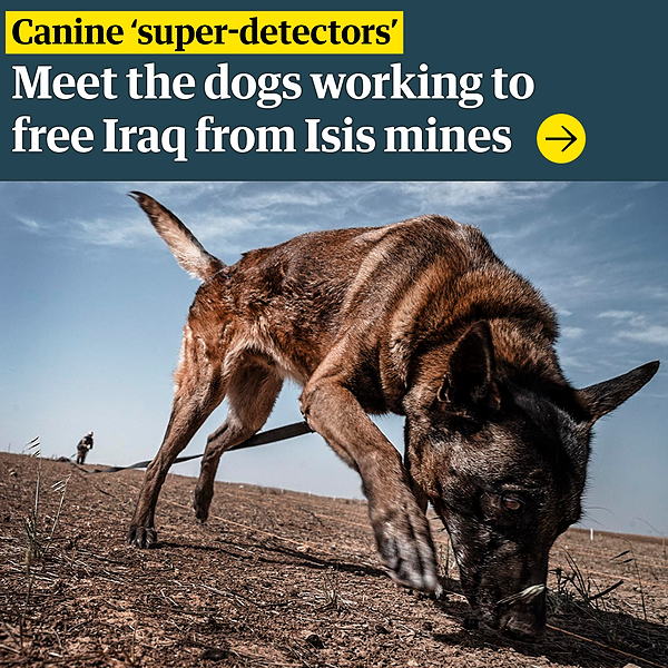 @guardian Canine 'super-detectors': the dogs working to free Iraq from Isis mines Link Thumbnail   Linktree