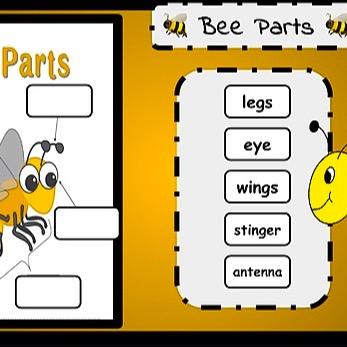 @WinterStorm Bee Room, Library, and 2 Activities Link Thumbnail   Linktree