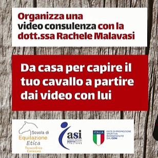 @etologiaequinamalavasi Consulenze on-line Link Thumbnail | Linktree