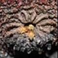 Apoie a Meliponicultura na Mata Atlântica