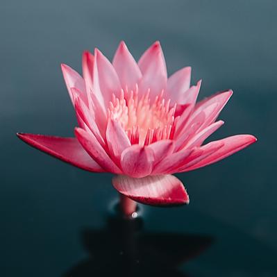 Anmeldung Zoom Meditationsabend
