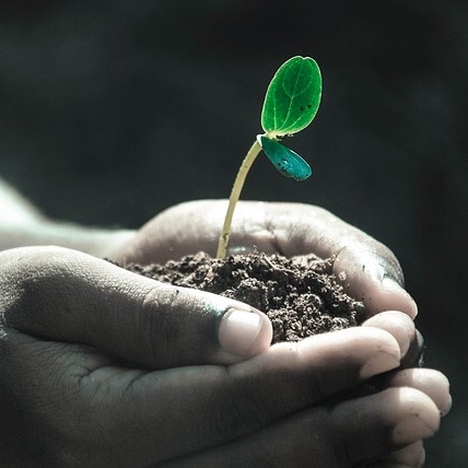 Seed sowing / Love Offering