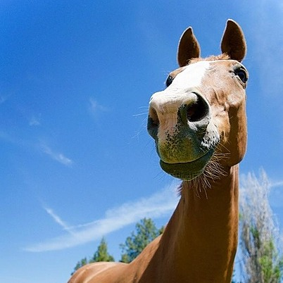 T.S. IDIOT a picture of a horse with a very lovely smile Link Thumbnail | Linktree