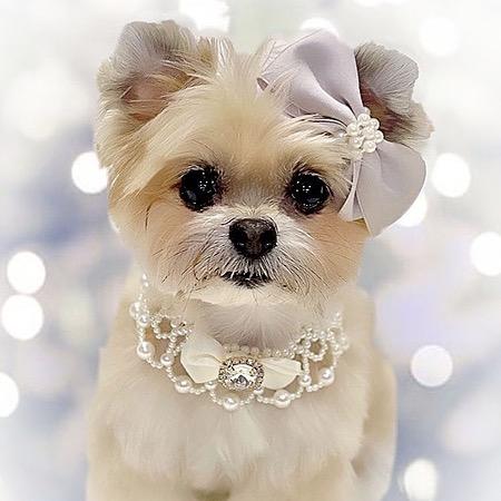 @delilah_diary Profile Image | Linktree