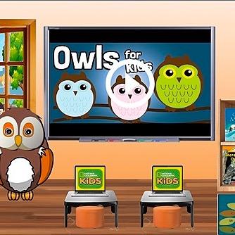 @WinterStorm Owl Room w/ Drag&Drop Activity Link Thumbnail   Linktree