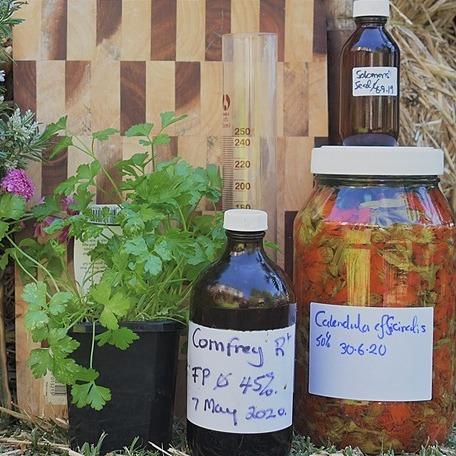 Christopher Smith Herbal Medicine Secrets - Website Link Thumbnail   Linktree