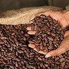 How to Roast Fine Cacao: A Beginner's Guide