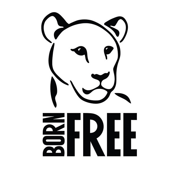 Ritchi Edwards Born Free Forever Exhibition 2022  Link Thumbnail | Linktree