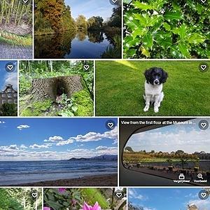 Linktree VierVoeterVriendelijk Shutterstock - fotos vanaf 0,10  Link Thumbnail | Linktree