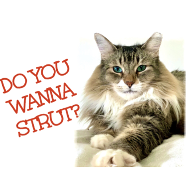 Give Me Shelter Project Strut Your Mutt Link Thumbnail | Linktree