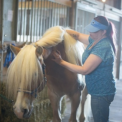 Anna Cluxton, LMT CEMT About equine massage services Link Thumbnail | Linktree